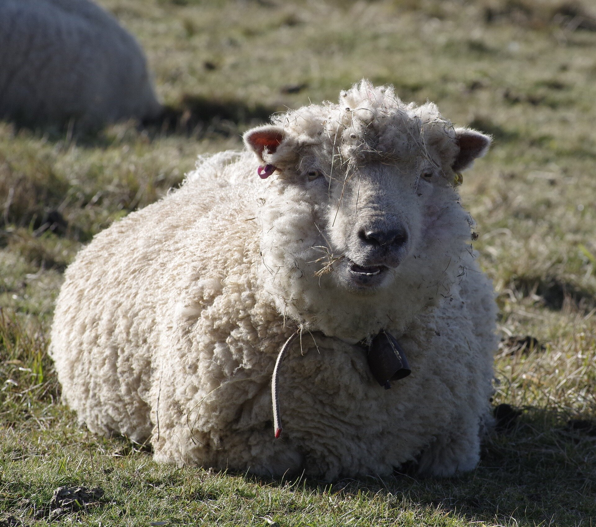 Best wool mattresses